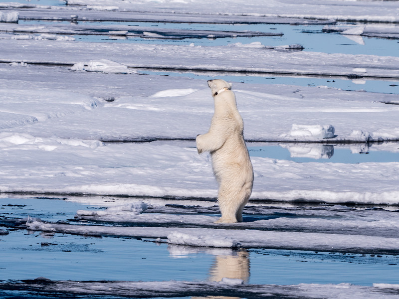 Polar Bear Hunt.jpg
