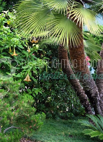 Garden Palm_batch_batch.jpg