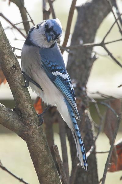 Birds-109.jpg