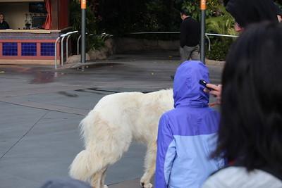 SD Zoo 2018-02-23