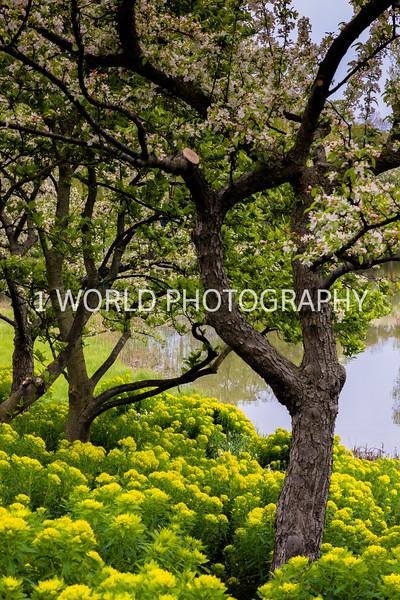 Chicago Botanic Garden Spring '17-247-5.jpg