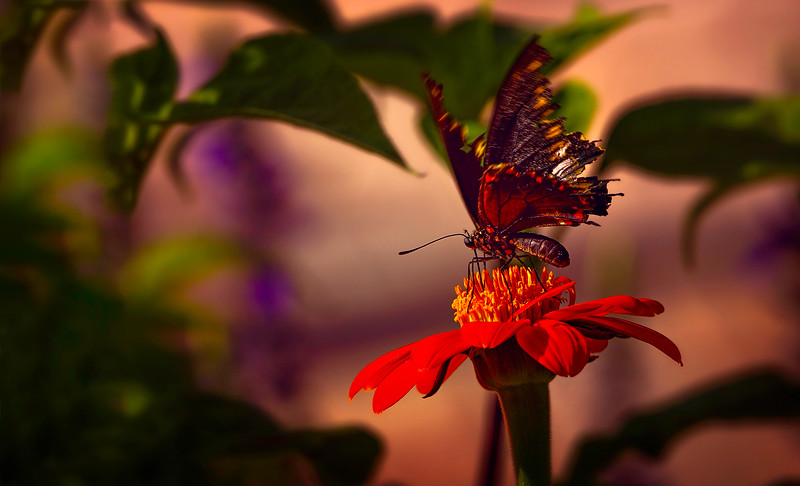 Butterfly-078.jpg