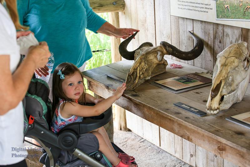 2016-07-17 Fort Wayne Zoo 340LR.jpg