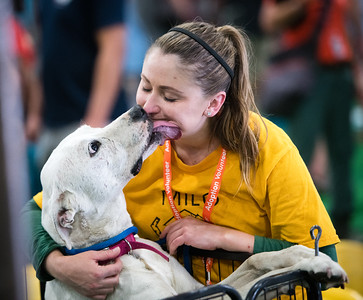 Humans melt and pets soak up love at the Bay Area Pet Fair