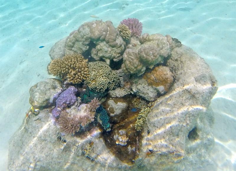 Coral in The Lagoonarium - St. Regis Resort - Bora Bora
