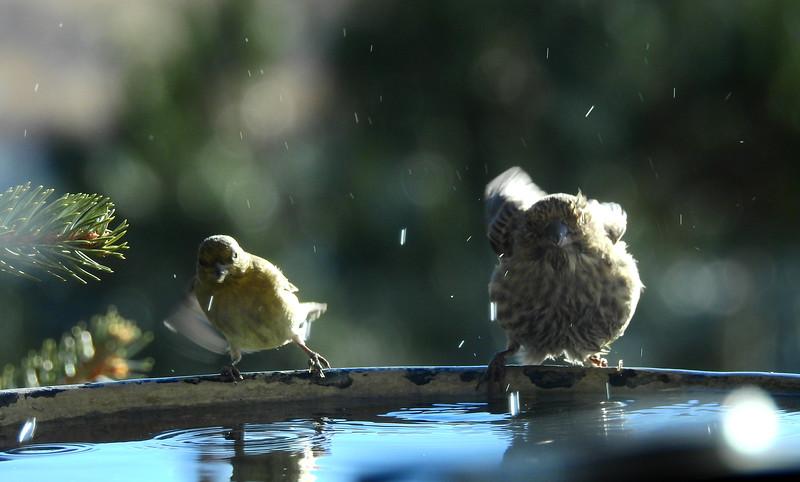 birds (213).JPG