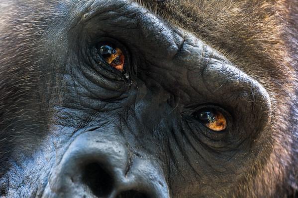 Gladys Porter Zoo Images