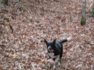 Kenda Hiking