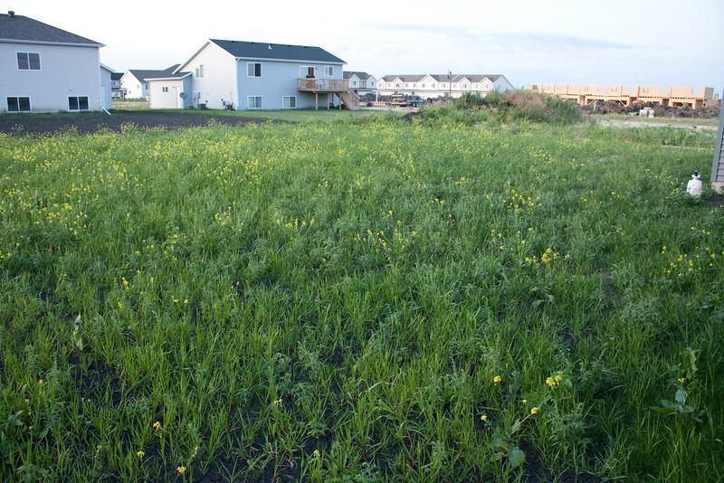Yard of weeds
