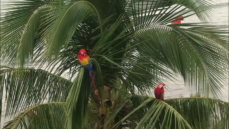 Macaws 246 no logo.mp4