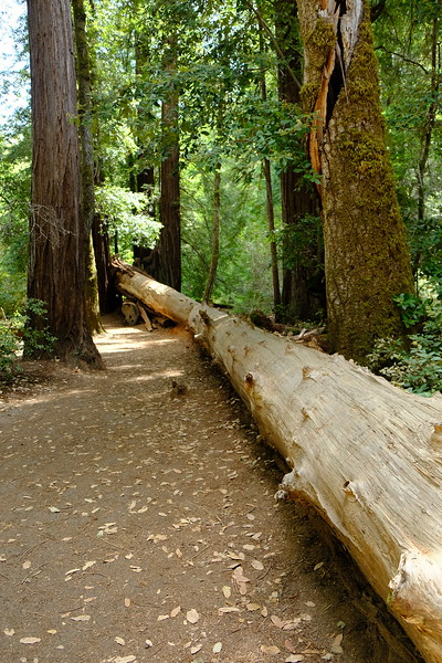 California Day 4 Big Basin 05-29-2017 37.JPG