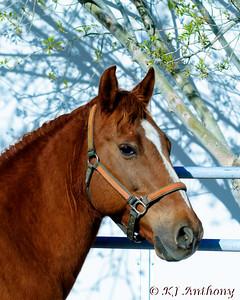 Talisman Farm - Graceful Equines
