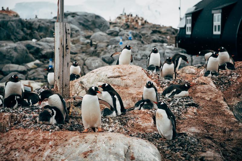 _MG_6578_20170121_Antarctica.jpg