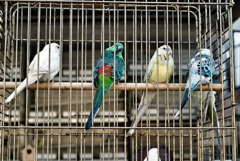 cagedbirds.jpg