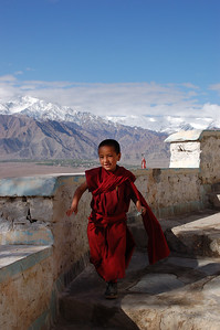 Thiksey Gompa and Shey Palace