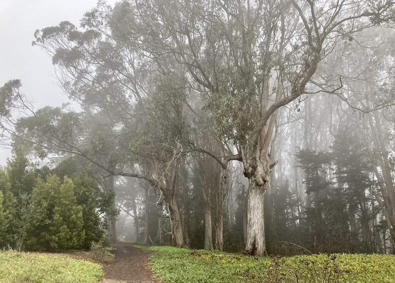 Foggy Presidio