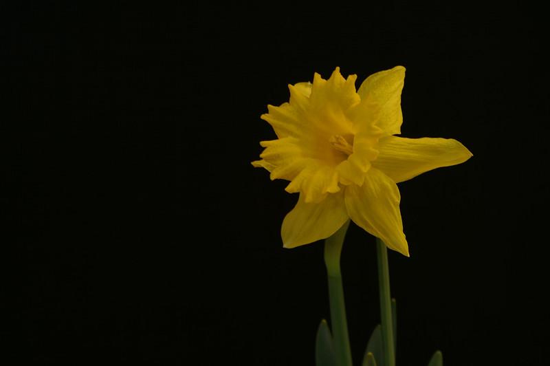 Yel Flower15.jpg