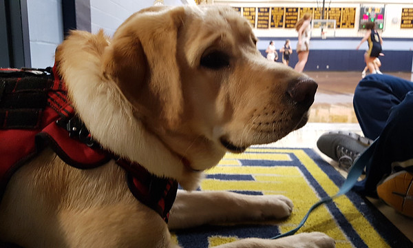 Littleton therapy dog in training 012921