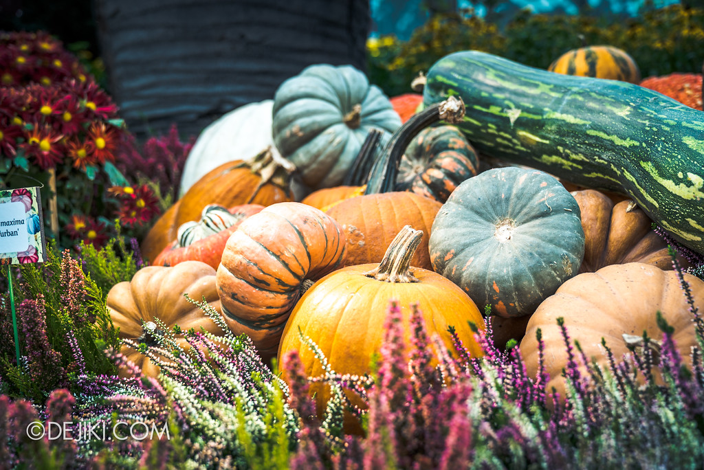 Gardens by the Bay - Autumn Harvest Floral Display - Pumpkin closeup 2