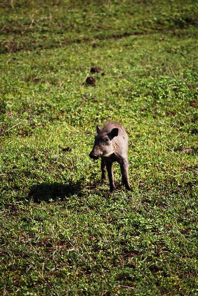 Ngorongoro (45).JPG