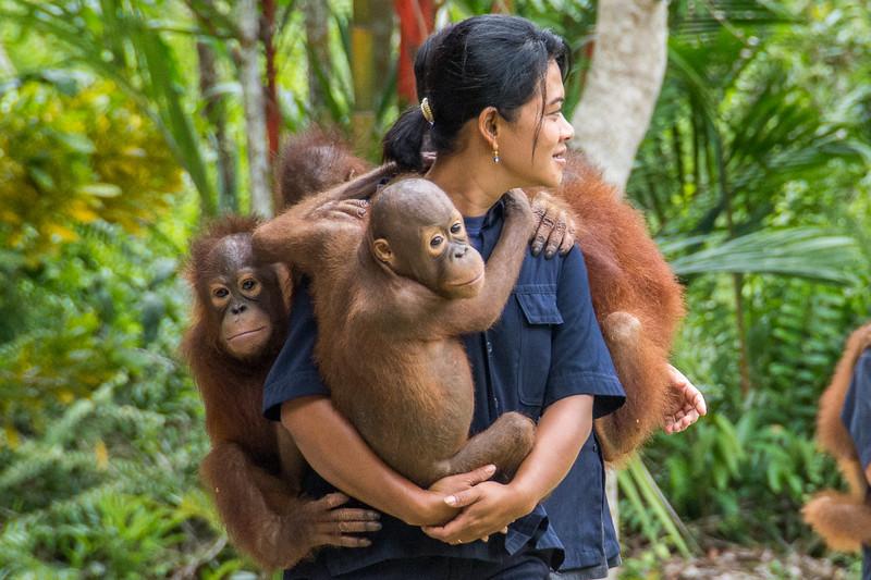 Borneo-2222.jpg