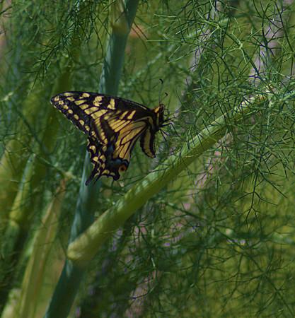 Bugs-2013