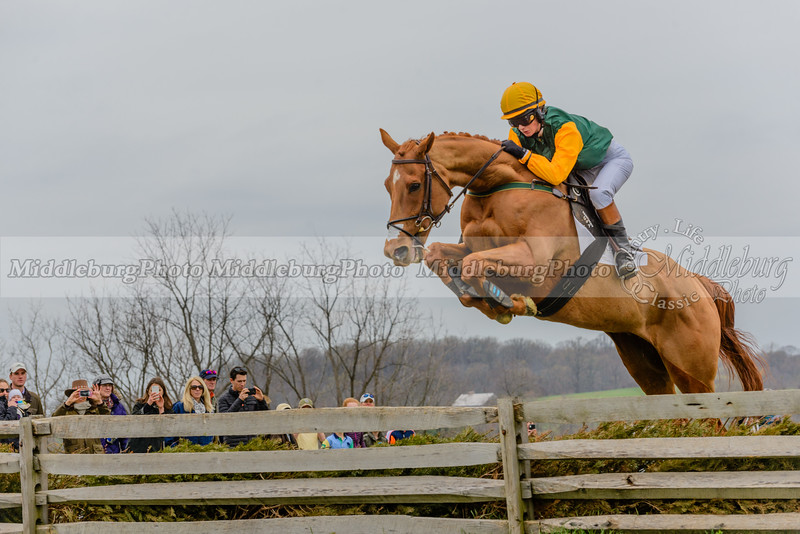 Mr. Stewart's Cheshire Foxhounds Point to Point