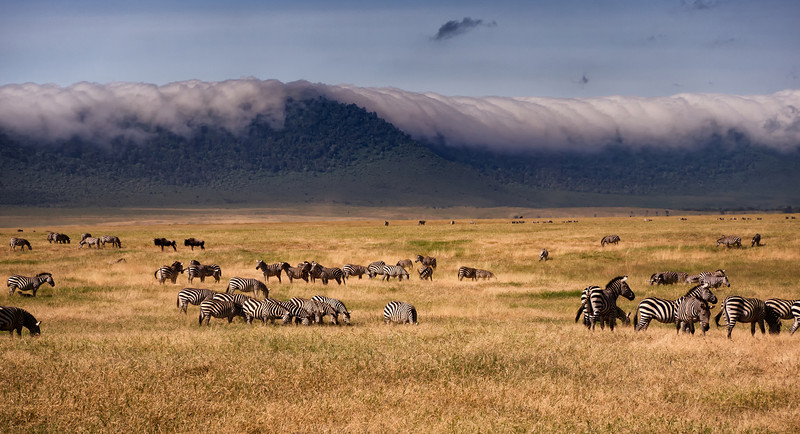 Mark-Fletcher-Zebras and Clouds.jpg