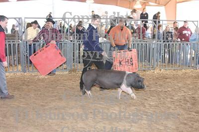 2009 Klein ISD Swine Show Class 4
