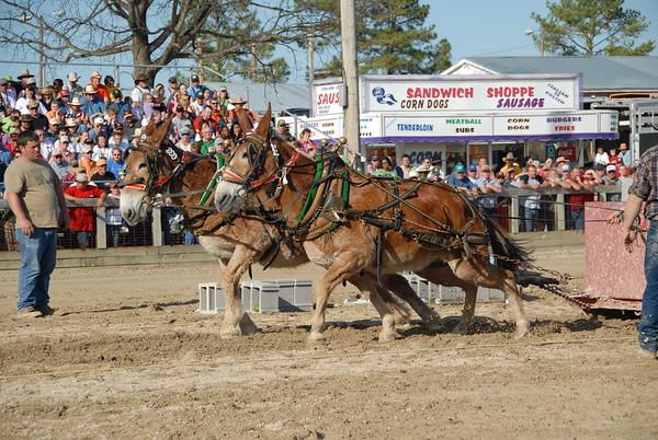 2006 Mule Pulling