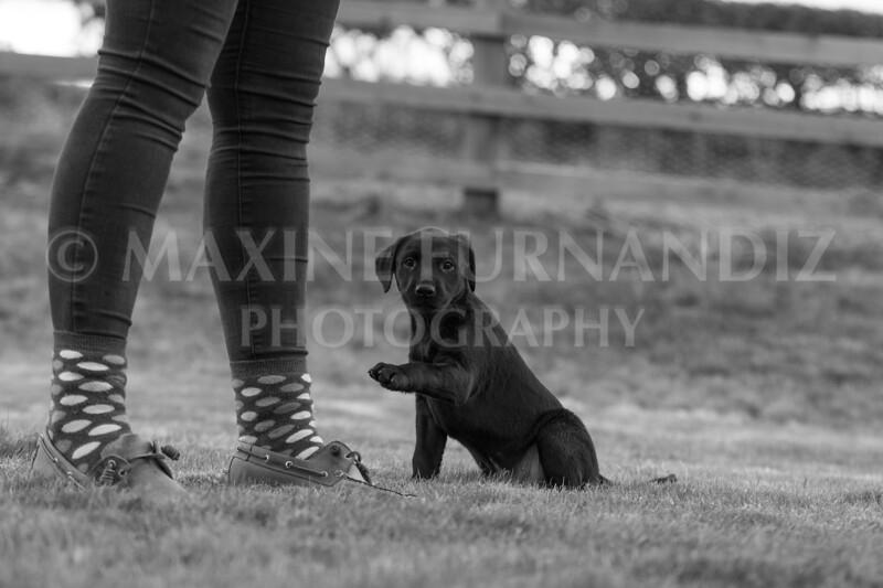 Weika Puppies 24 March 2019-6537.jpg