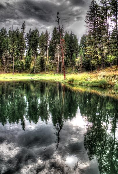 dead tree on echo lake.jpg