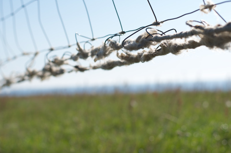 Kåseberga Wool