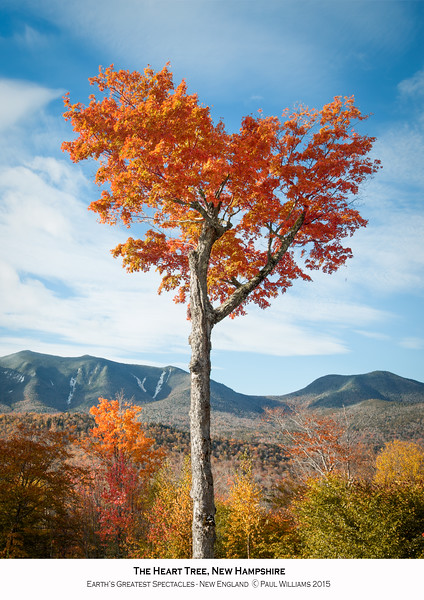 Heart Tree in the fall.jpg