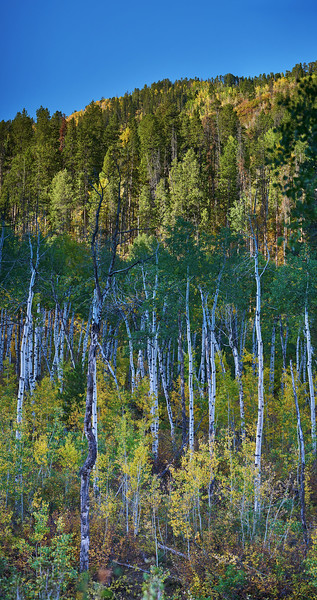 Yeoman Trees Tall Pano web.jpg
