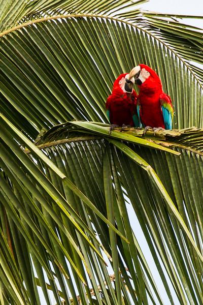 Rainforest31.jpg