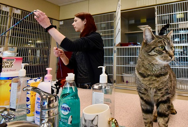 Animal shelters adjust to new normal