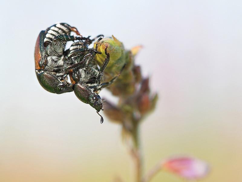 for beetle lovers.jpg