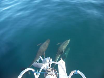 2007 - Sailing Mexico - Puerto Vallarta -> Cabo San Lucas