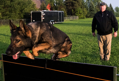 20170523 - Dog Training (SN)