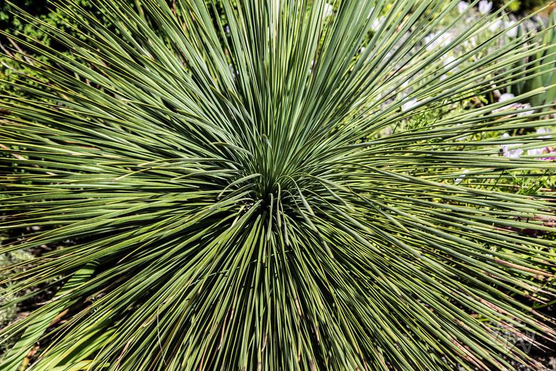PlantDelightsSpring2013-2688.jpg