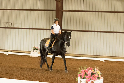 Horse 620