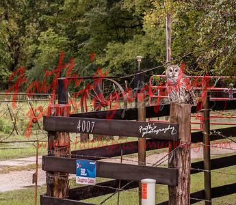 Owl  101318