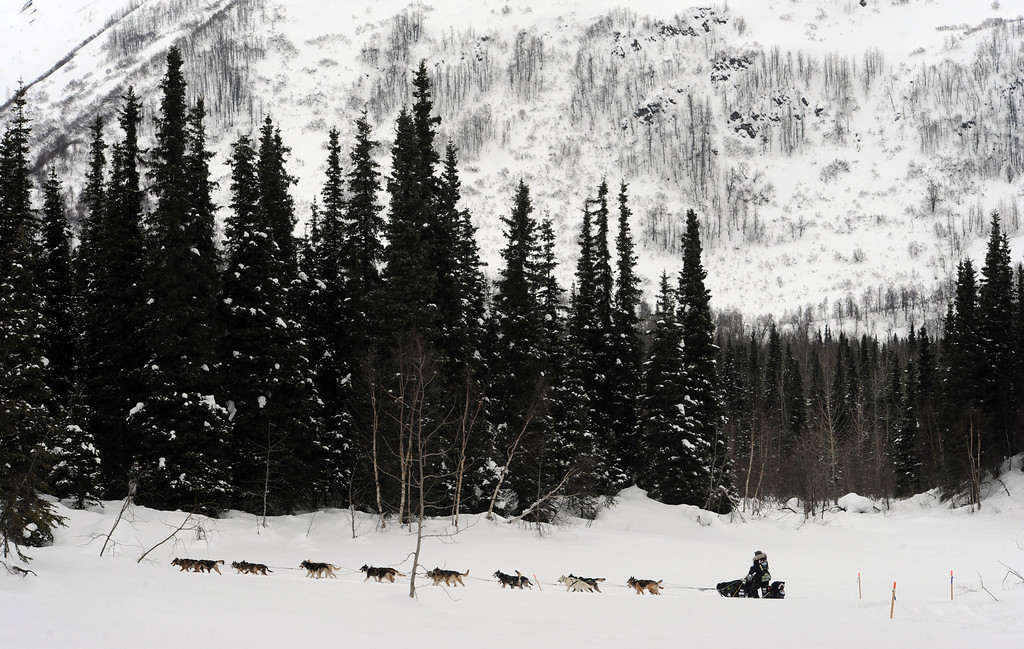 . Scott Janssen heads down the trail after departing the Finger Lake checkpoint in Alaska during the Iditarod Trail Sled Dog Race on Monday, March 4, 2013. (AP Photo/The Anchorage Daily News, Bill Roth)