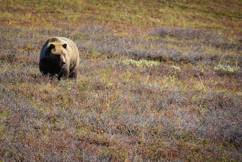 Denali-National-Park-144.jpg