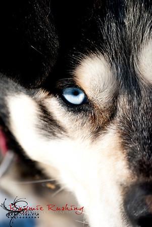 Chena Dog Sled