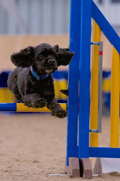 small dog final 1234.jpg