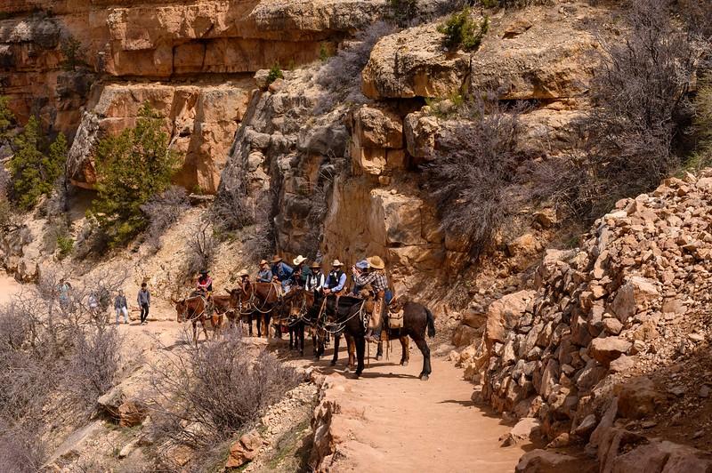 Mule Train, South Kaibab Trail