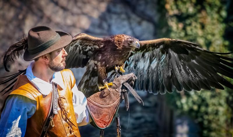 Golden Eagle - Steinadler