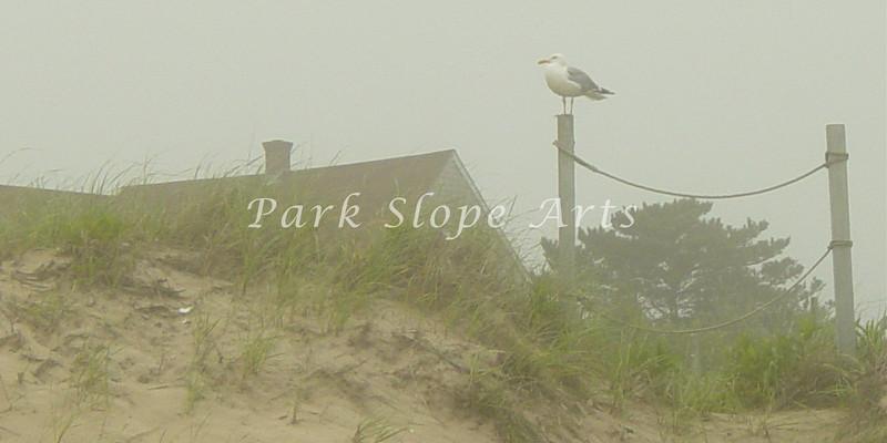 Block Islandr-00848.jpg